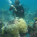 Jessica Carilli collects core sample from coral in Butaritari, Gilbert Islands.