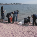 Volunteers participate in a COASTSWEEP cleanup.