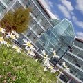 Daisies in front of the Integrated Sciences Complex