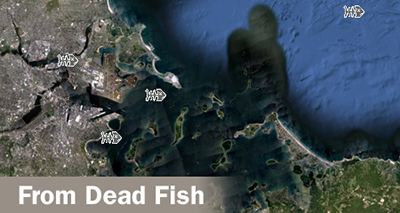Graphic composition thanks to Lisa Link. Satellite and dead fish images courtesy Google Earth.