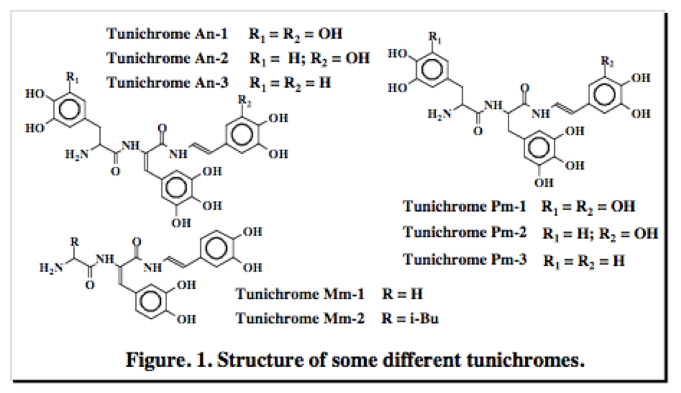 Structure of some different tunichromes