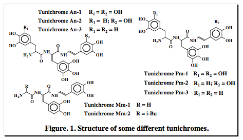 Figure: Structure of some different tunichromes