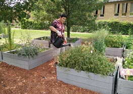 A student in the Gardening Club of Project REACH's summer program tends to one of the gardens.