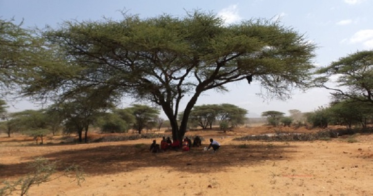 Asaka preparing to hold a focus group discussion with a group of Samburu warriors under an acacia tree in Samburu County, Kenya