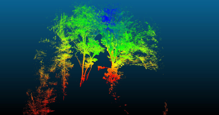 The colors in this 3D scan of the upper branches of trees relate to height. UMass Boston scientists took measurements 100 feet up in the air from a bucket lift nicknamed