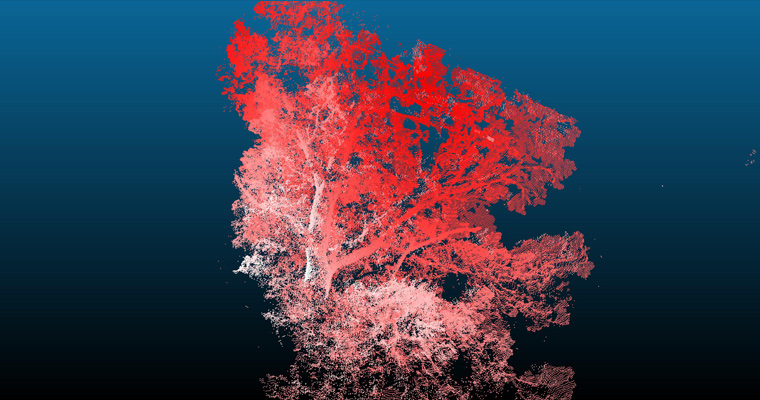 By combining scans from multiple angles around a tree, laser scanners produce a set of points (a point cloud) in 3D space.