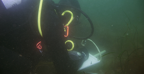 Student conducting research in scuba gear underwater