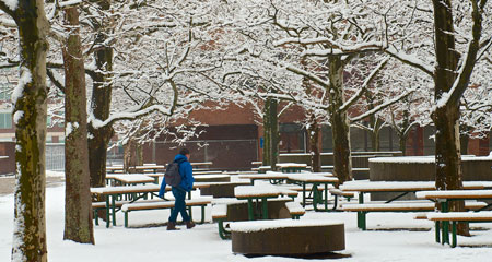 Biology PhD student Uttam Babu Shrestha took this picture after new snow fell January 16, 2013.