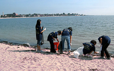 Picture of volunteers cleaning up a beachfront area