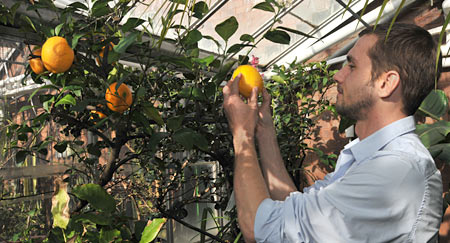 Greg Meyers inspects the lemons in the Biology Department Greenhouses on the fourth floor of the Science Center.