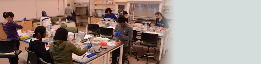 Students at work in UMass Boston's Sandbox Lab